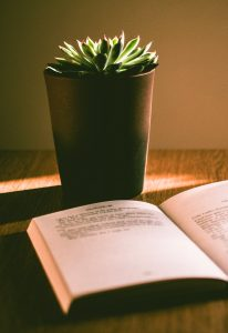 book and potted plant on desk